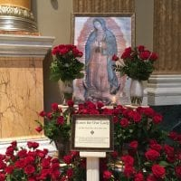 Roses for the Feast Day of Our Lady of Guadalupe