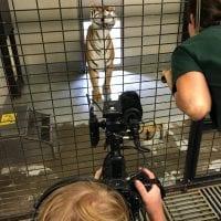 Irvine Park Zoo, Chippewa Falls