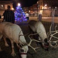 Santa's Reindeer at Burlington Christmas Parade