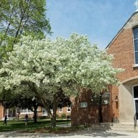 Spring Blooms at the National Shrine of Our Lady of Good Help