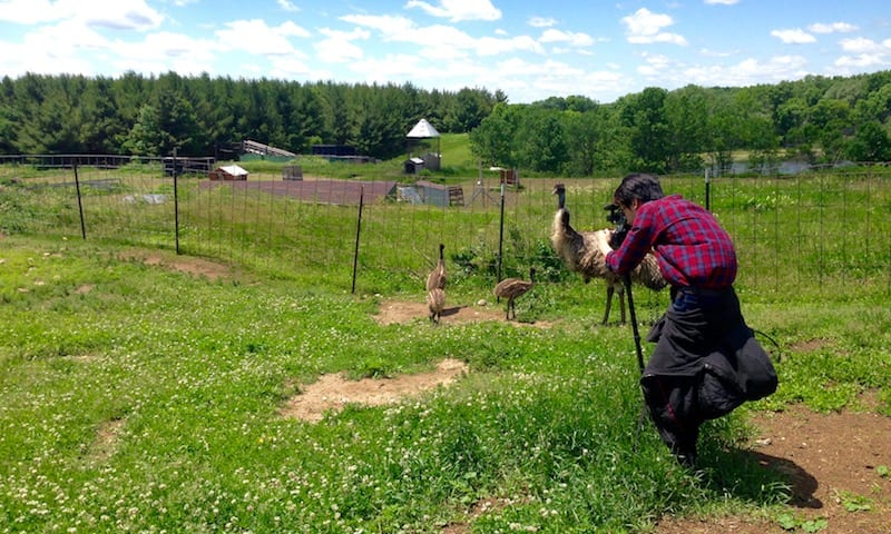 Filming at Glacier Rock Farms in Ixonia