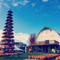 Mommsen's Pumpkin Patch