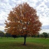 Fall Colors at Hiawatha Golf Club