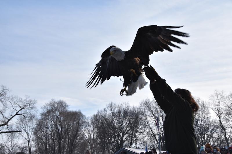 Sauk Prairie Bald Eagle Release
