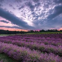 Devils Lake Lavender by Joe Garza