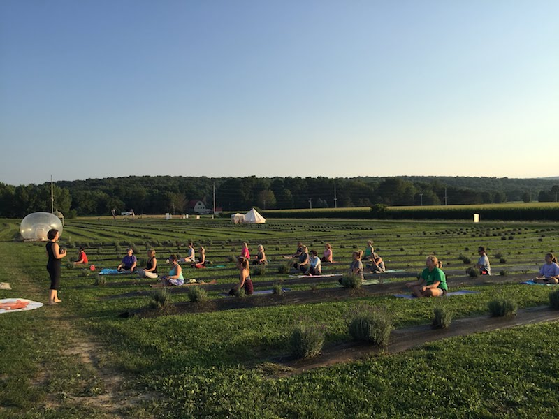 Yoga at Devil's Lake Lavender