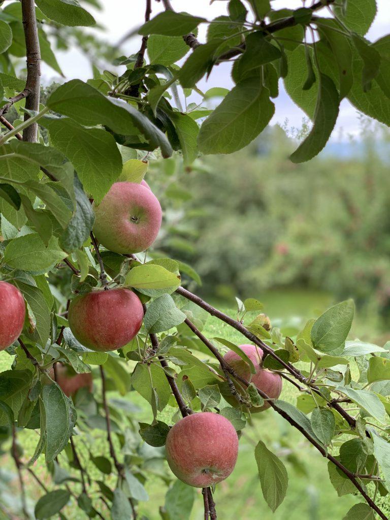 Lapacek's Orchard, Poynette