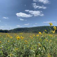 Merrimac's Nature Areas