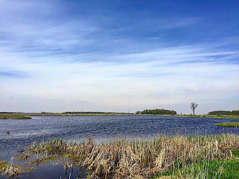 Horicon Marsh State Wildlife Area